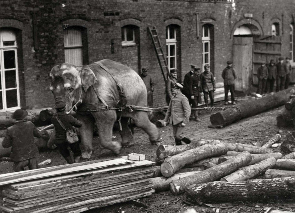 Long Distance Towing >> RBL Ramsbottom WW1 Animals